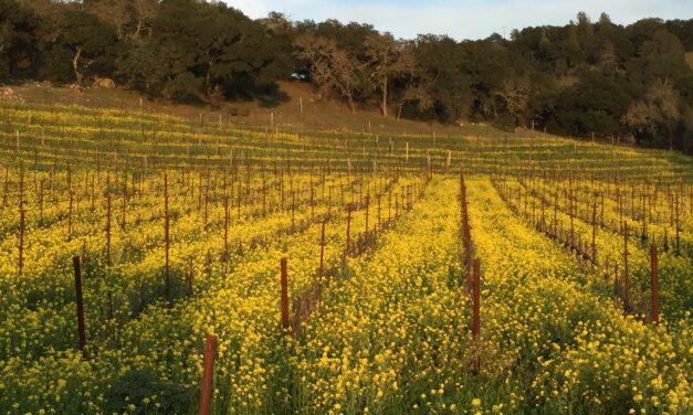 Benefits of Mustard Seed